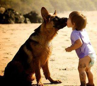cute german shepherd facts