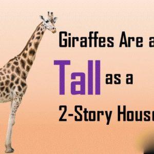 Giraffe Facts: 10 Fun Facts about Giraffes | Interesting Facts