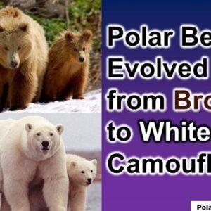 Fun Polar Bear Facts For Kids: 10 Interesting Facts about Polar Bears