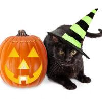 halloween traditions around the world