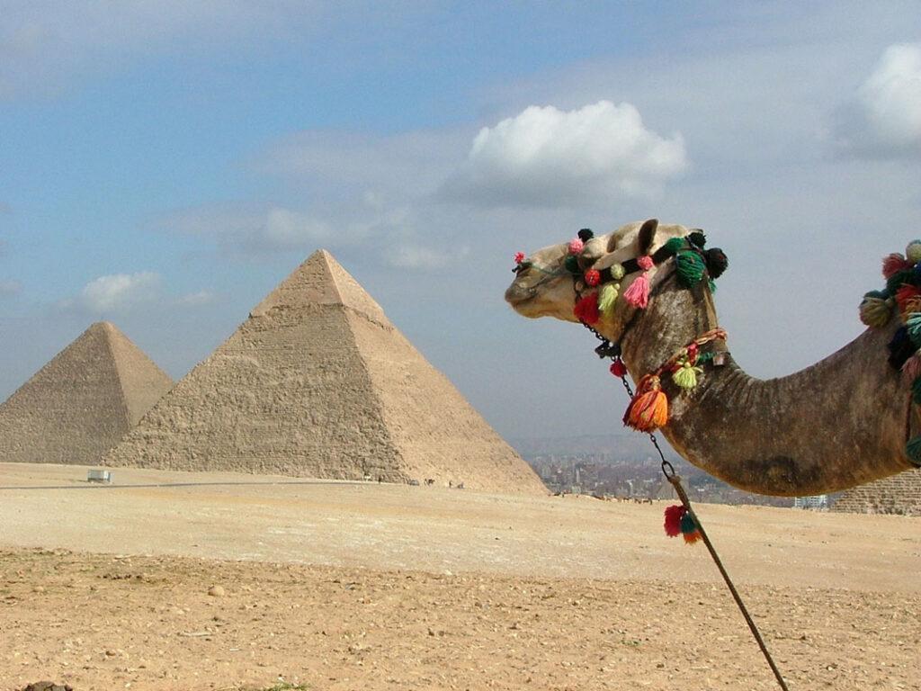 Camel 7