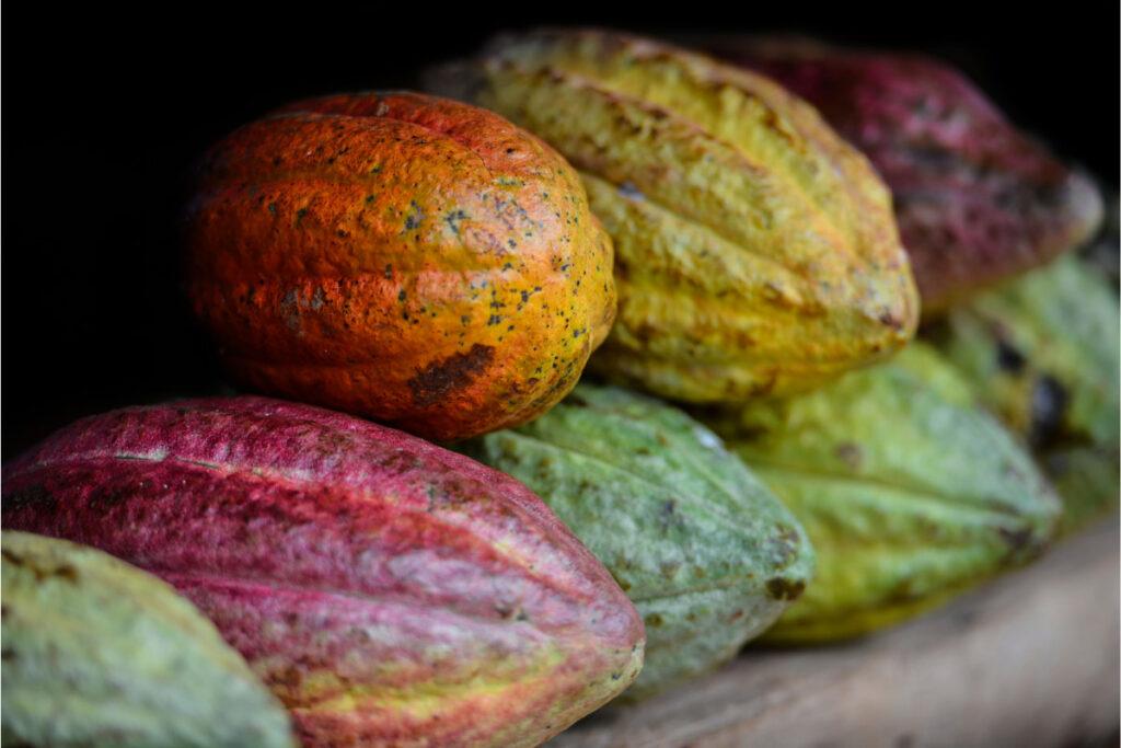 Macro of Cocoa pods