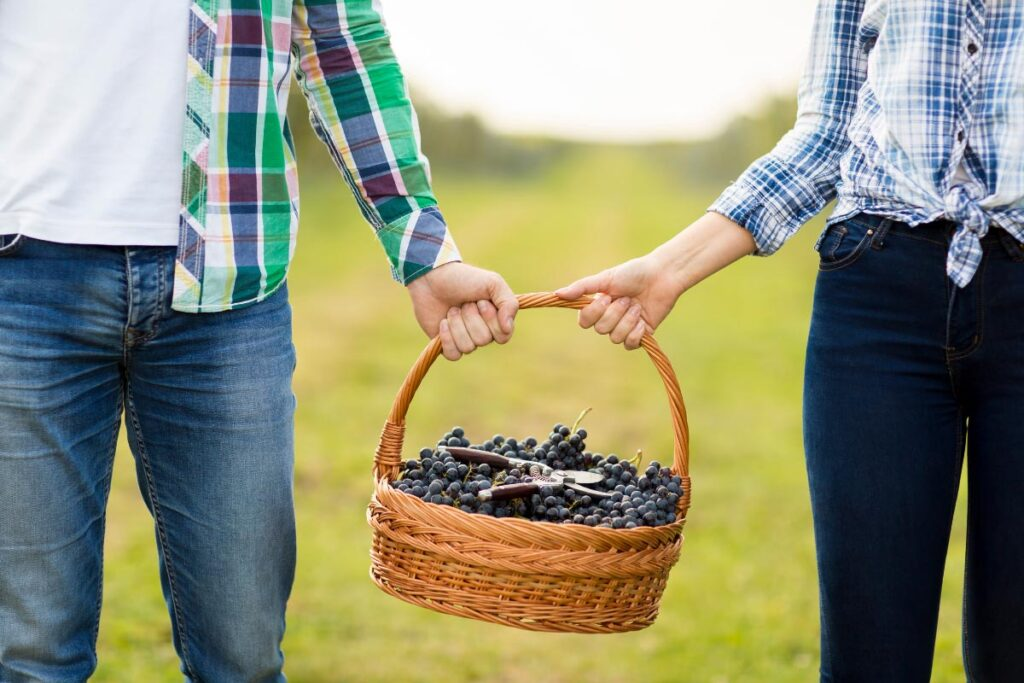 couple hold basket filled with grapes