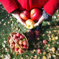 person holding apples in a field