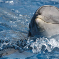 smiling facts about dolphins